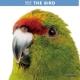 THE BIRD カレンダー 2017