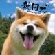 秋田犬 2019 カレンダー