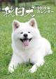 卓上 秋田犬 2019 カレンダー