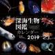 深海生物図鑑 2019 カレンダー