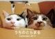 シンクロ姉妹猫うちのとらまる カレンダー 2017