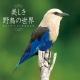 美しき野鳥の世界 カレンダー 2017