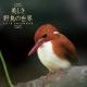 美しき野鳥の世界 2018 カレンダー