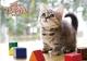子猫のマンチカン(祝日訂正シール付き) 2019 カレンダー