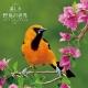 美しき野鳥の世界(祝日訂正シール付き) 2019 カレンダー