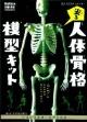 光る 人体骨格模型キット 科学と学習PRESENTS