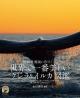 世界で一番美しい クジラ&イルカ図鑑 絶景・秘境に息づく