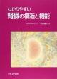 わかりやすい腎臓の構造と機能
