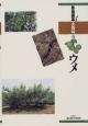 果樹園芸大百科 ウメ (8)