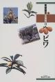 果樹園芸大百科 ビワ (11)