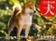 ニッポンの犬カレンダー 2016
