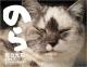 猫カレンダー のら 2017