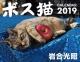 ボス猫カレンダー 2019