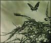 歌う理由/はばたいて鳥は消える