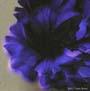 Seele Blume