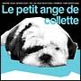LE PETITE-ANGE DU COLLETTE