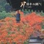NEW BEST ONE 琴/日本の調べ