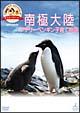 「どうぶつ奇想天外!」presents 南極大陸・アデリーペンギン子
