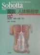 Sobotta図説人体解剖学 体幹・内臓・下肢 第2巻
