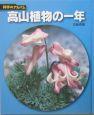 高山植物の一年