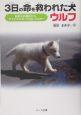 3日の命を救われた犬ウルフ 殺処分の運命から、アイドルになった白いハスキー