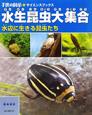 水生昆虫大集合 水辺に生きる昆虫たち