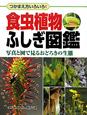 食虫植物 ふしぎ図鑑 写真と図で見る驚きの生態 つかまえ方いろいろ!