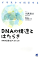 DNAの構造とはたらき イラストで科学する DNA図書館へようこそ