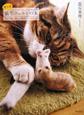 もっと 猫毛フェルトの本 うちの猫と楽しむ簡単ハンドクラフト