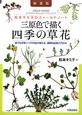 三原色で描く 四季の草花<新装版> 松本キミ子のフィールドノート