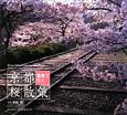 京都 桜散策