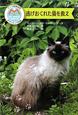 逃げおくれた猫を救え マック動物病院ボランティア日誌