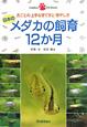 日本の メダカの飼育12か月 月ごとの上手な育て方と増やし方