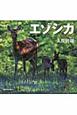 エゾシカ 北国の野生動物
