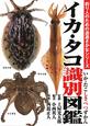 イカ・タコ 識別図鑑 釣り人のための遊遊さかなシリーズ