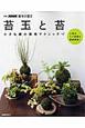 苔玉と苔 小さな緑の栽培テクニック 人気のミニ盆栽も徹底解説!