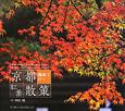 京都 電車で行く 紅葉散策