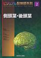 側頭葉・後頭葉 ビジュアル脳神経外科2