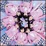 桜の木になろう(A)(通常盤)(DVD付)