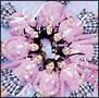 桜の木になろう(B)(通常盤)(DVD付)