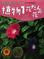 植物 花だんの花 教科書に出てくる 生き物観察図鑑2 (1)