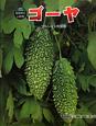ゴーヤ 科学のアルバムかがやくいのち8 ツルレイシの成長