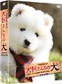 連続テレビドラマ 犬飼さんちの犬 DVD-BOX