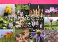 野山の花をさがす12か月 生きものカレンダー1
