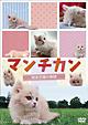 マンチカン~短足子猫の物語~