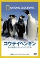 コウテイペンギン 氷の世界のスーパーアイドル