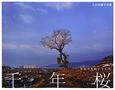 千年桜 それでも咲いていた 大沼英樹写真集