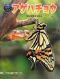 アゲハチョウ 科学のアルバムかがやくいのち11 完全変態する昆虫