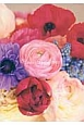 Flower Diary 2013