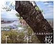 忘れえぬまた再びの千年桜 大沼英樹写真集